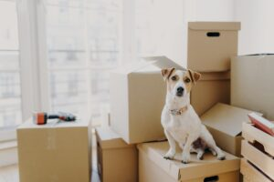 How to successfully complete your move with pets